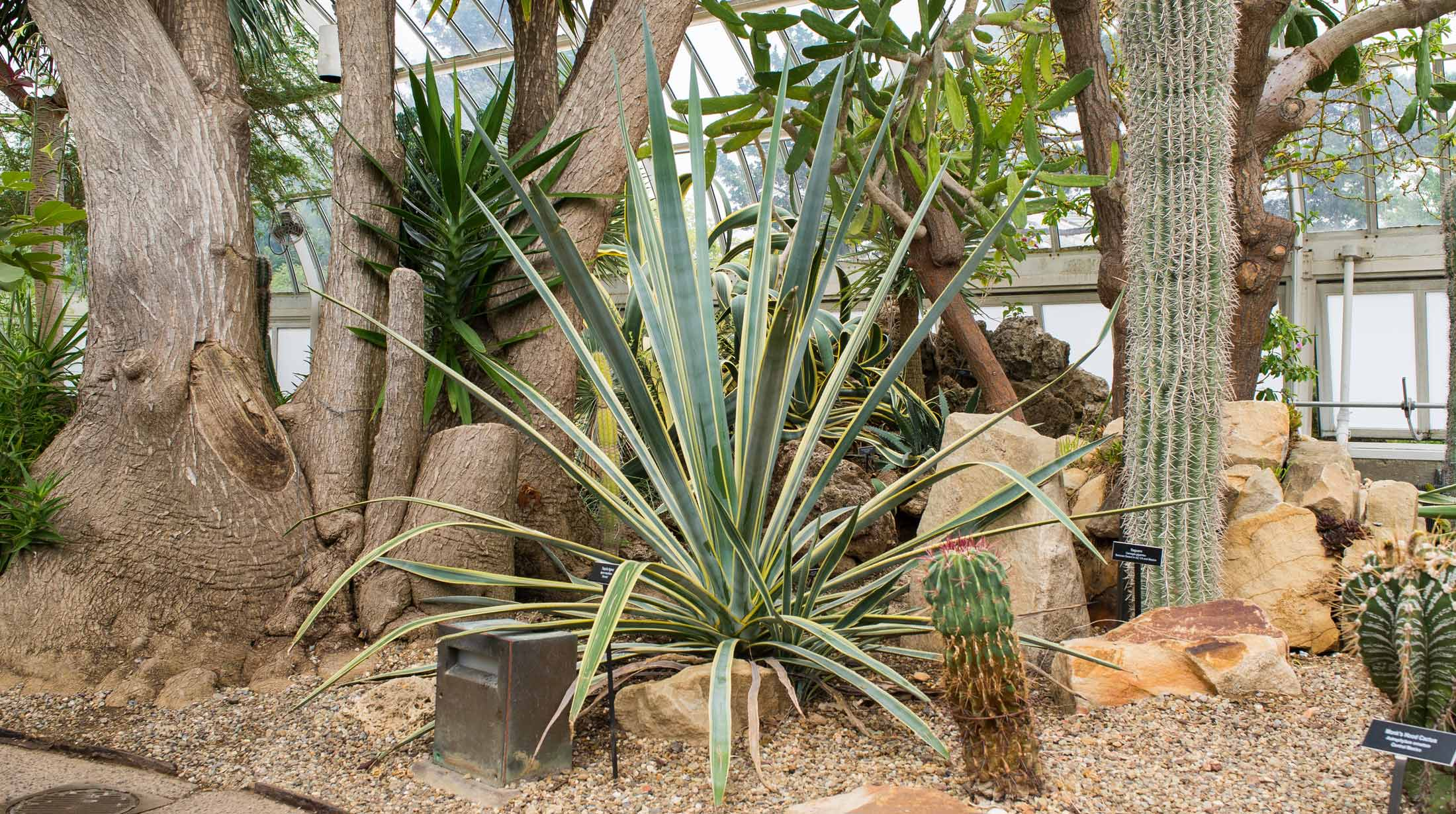 Plant Collections | Phipps Conservatory and Botanical Gardens ...