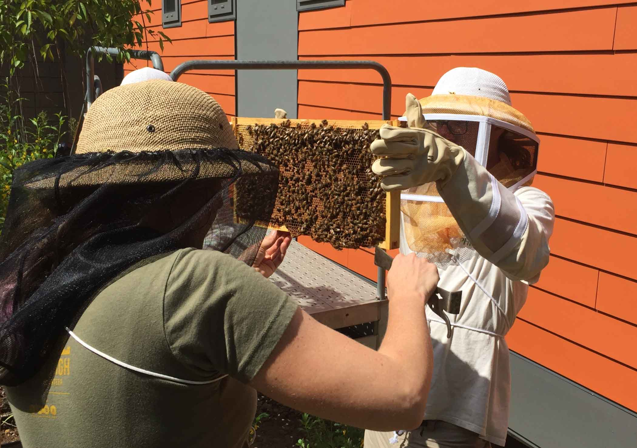 Phipps staff install the Observational Beehive in 2016.