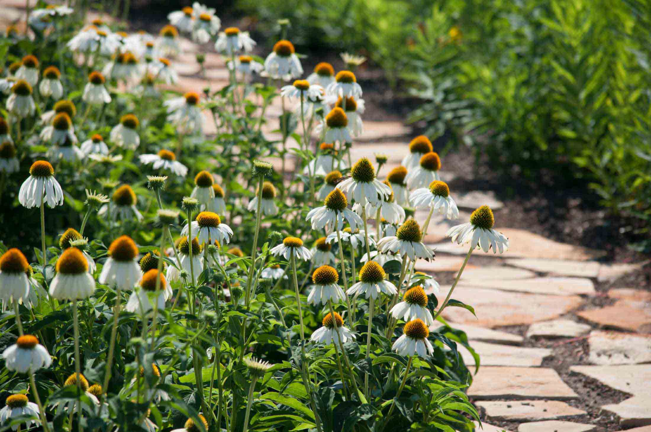 Studio Phipps | Phipps Conservatory and Botanical Gardens ...