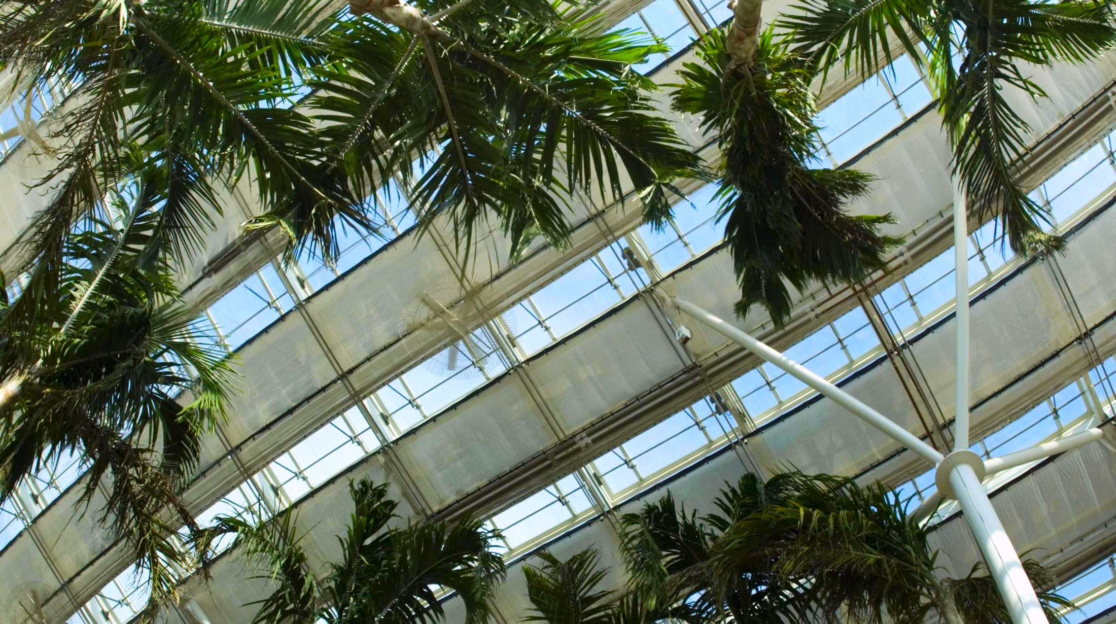 Tropical Forest Conservatory Phipps Conservatory And