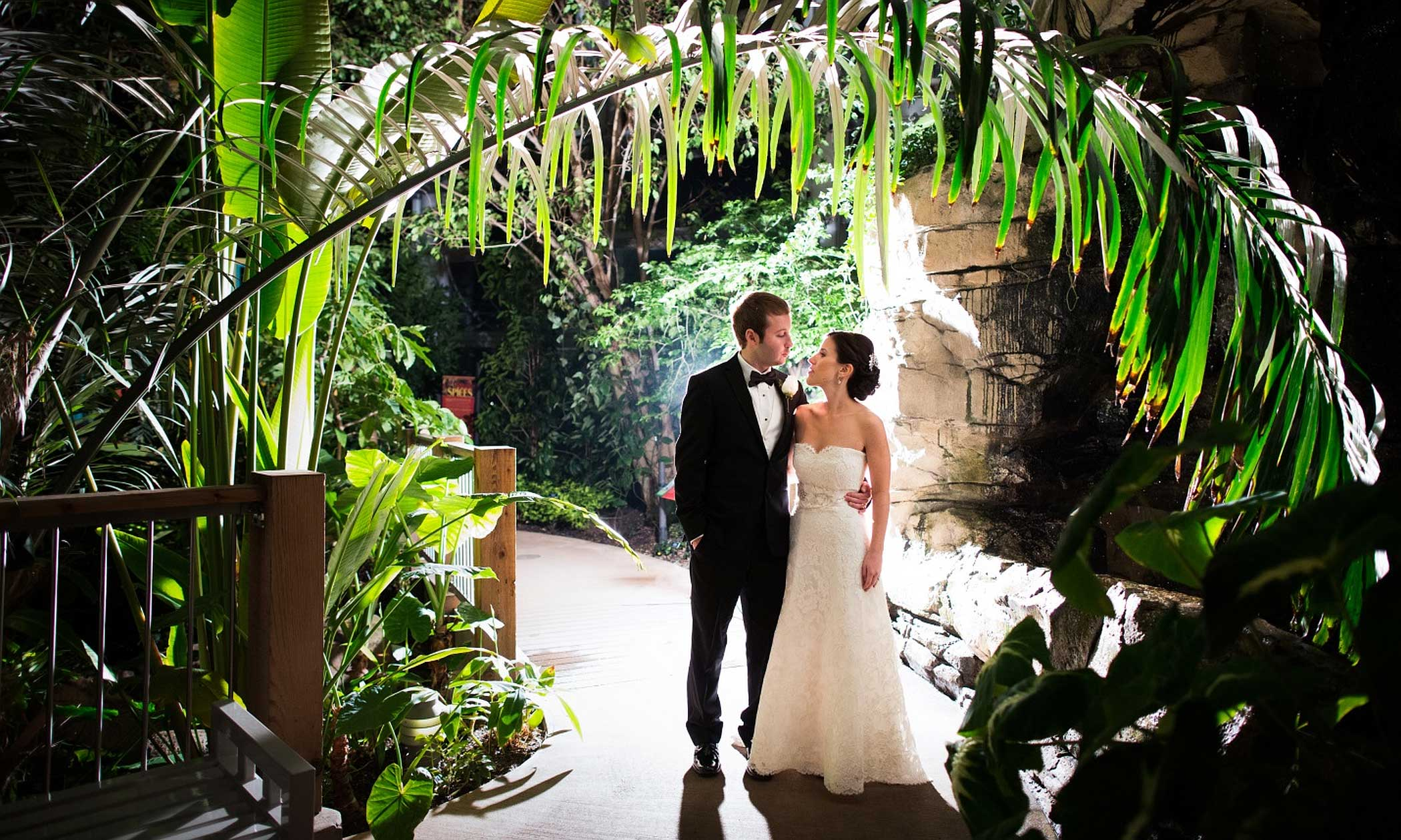 Weddings Phipps Conservatory And Botanical Gardens Pittsburgh Pa