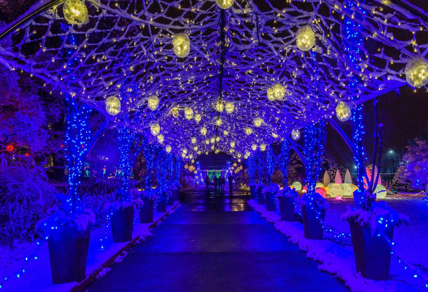 Winter Light Garden