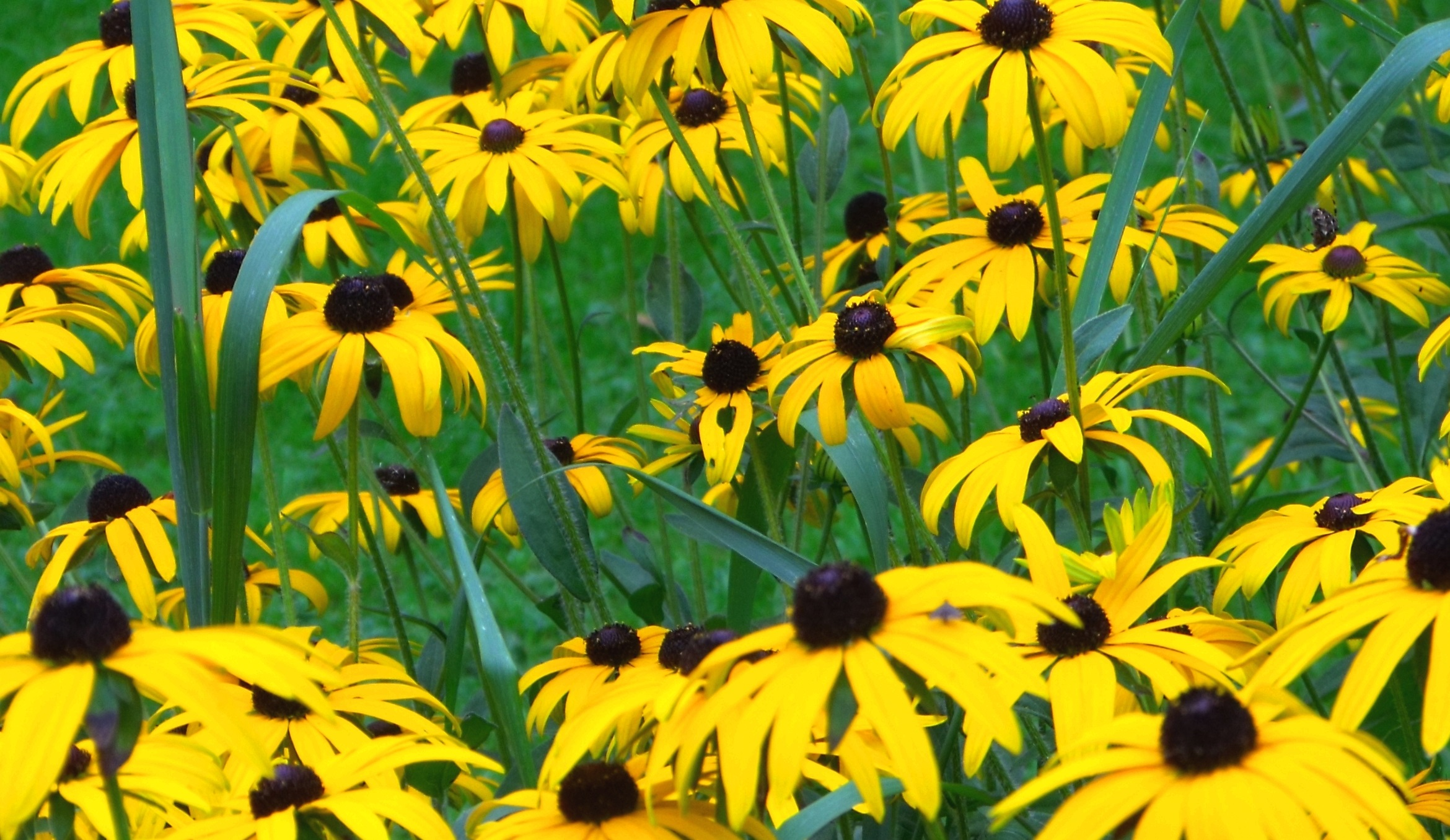 Biopgh Blog Wild About Wildflowers Phipps Conservatory And