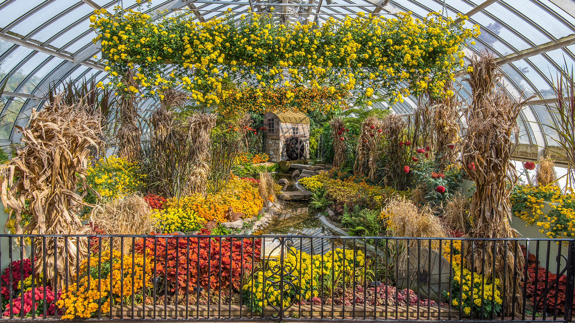 Desktop wallpapers phipps conservatory and botanical gardens fall flower show dhlflorist Choice Image