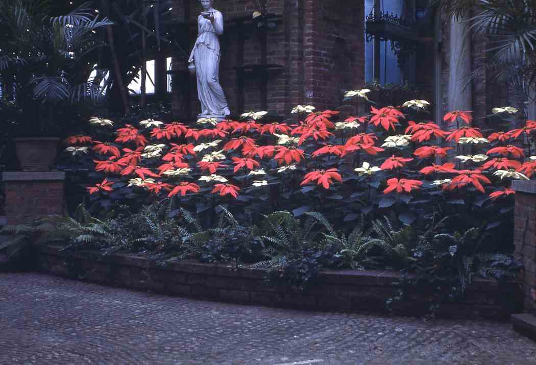 Winter Flower Show 1947