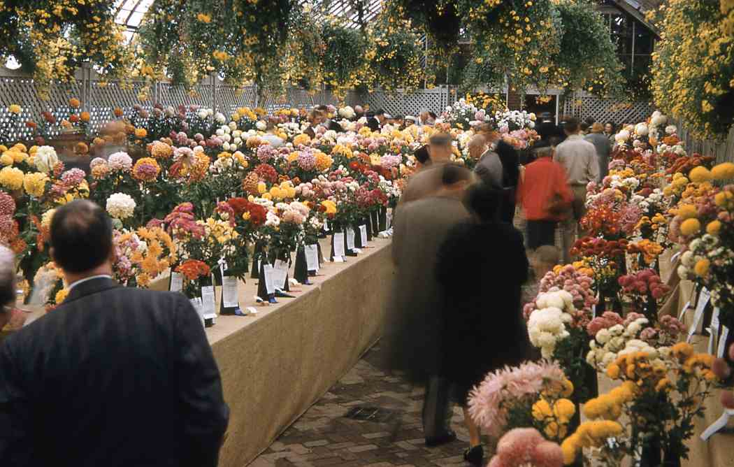 Fall Flower Show 1956: The Pittsburgh Story
