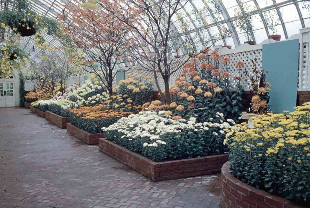 Fall Flower Show 1962 Phipps Conservatory And Botanical