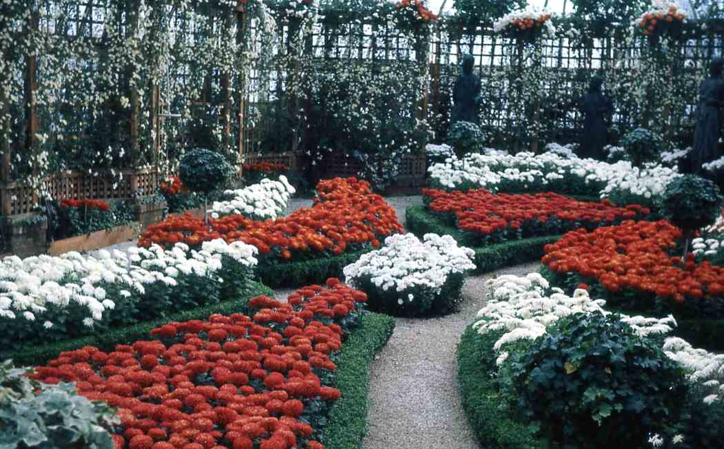 Winter Flower Show 1966