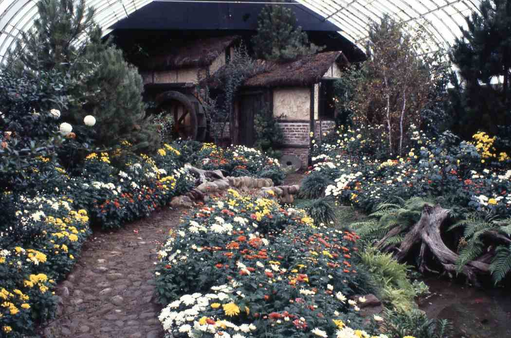 Fall Flower Show 1979: Greatest Show Under the Big Glass Top