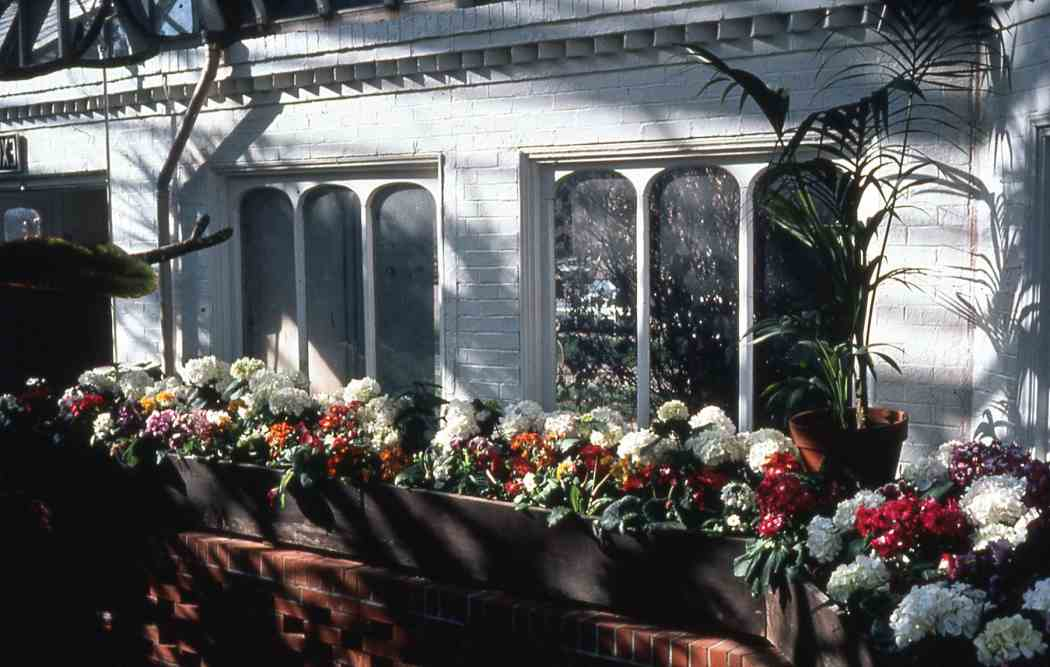Spring Flower Show 1980: Spring in the South