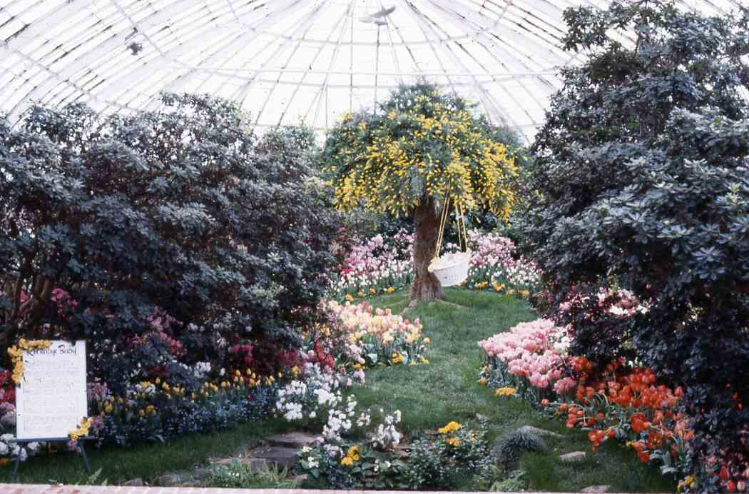 Spring Flower Show 1982: Birth of Spring