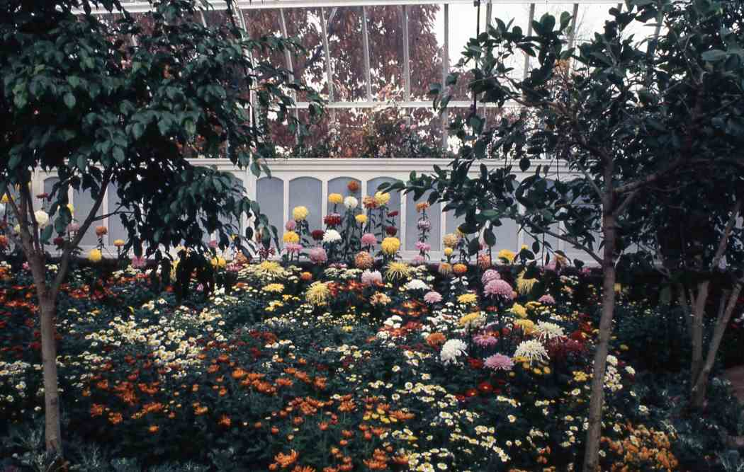 Fall Flower Show 1987: Kings, Queens and Chrysanthemums
