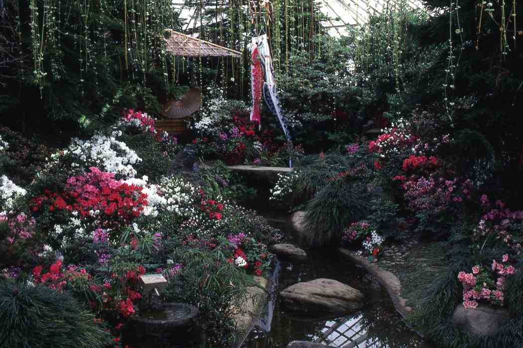 Winter Flower Show 1987: From Our House to Yours