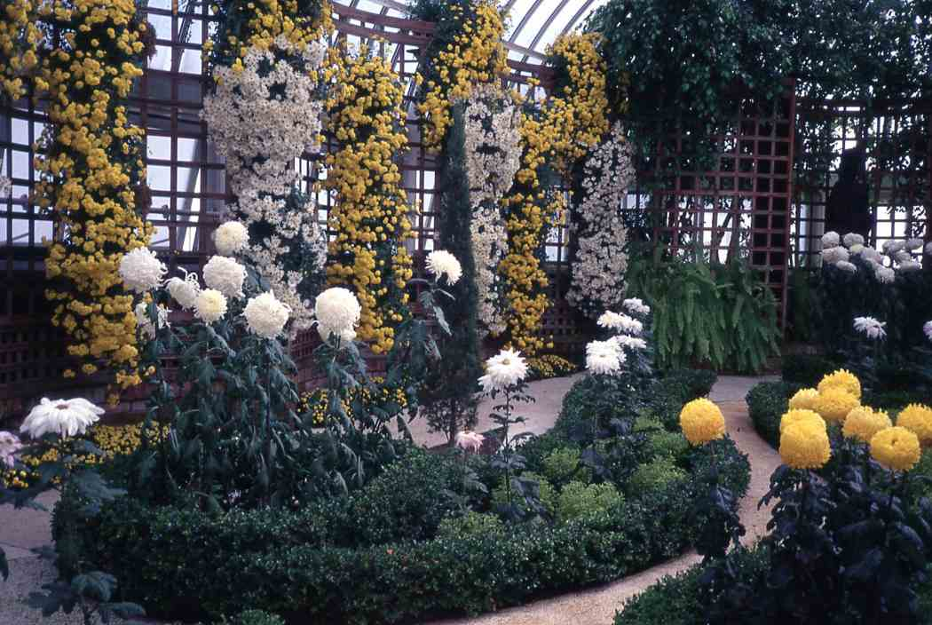 Fall Flower Show 1998: On the Way to Ahhhhs