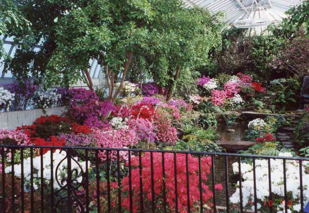 Spring Flower Show 2002: The Colors of Sunlight