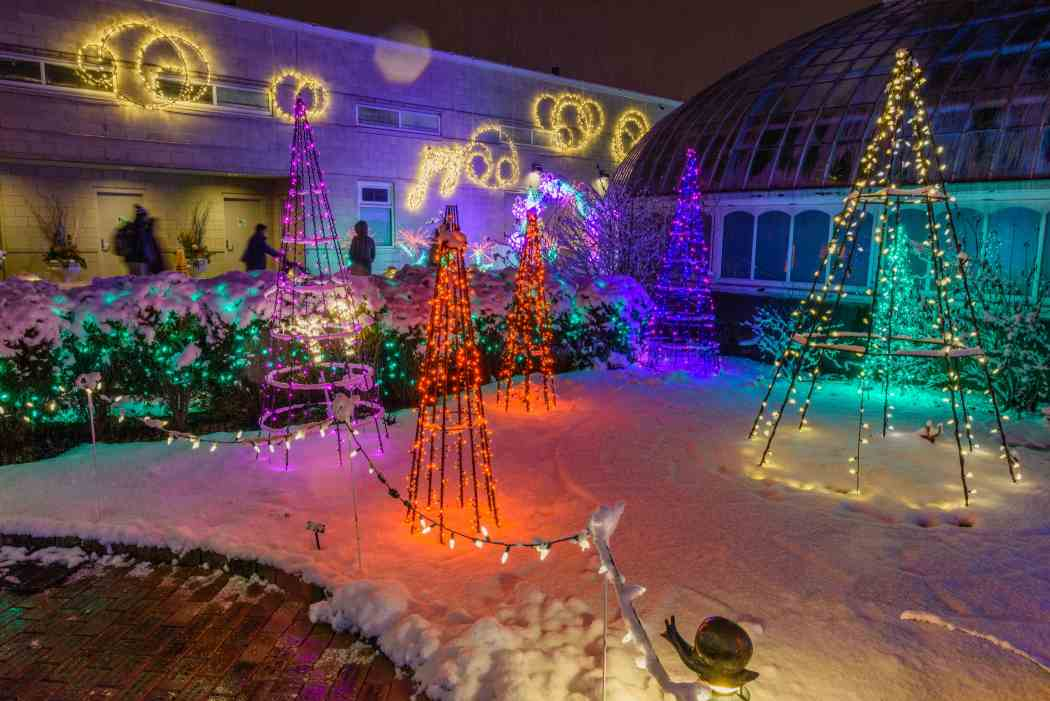 winter flower show and light garden 2016 days of snow and nights aglow phipps conservatory