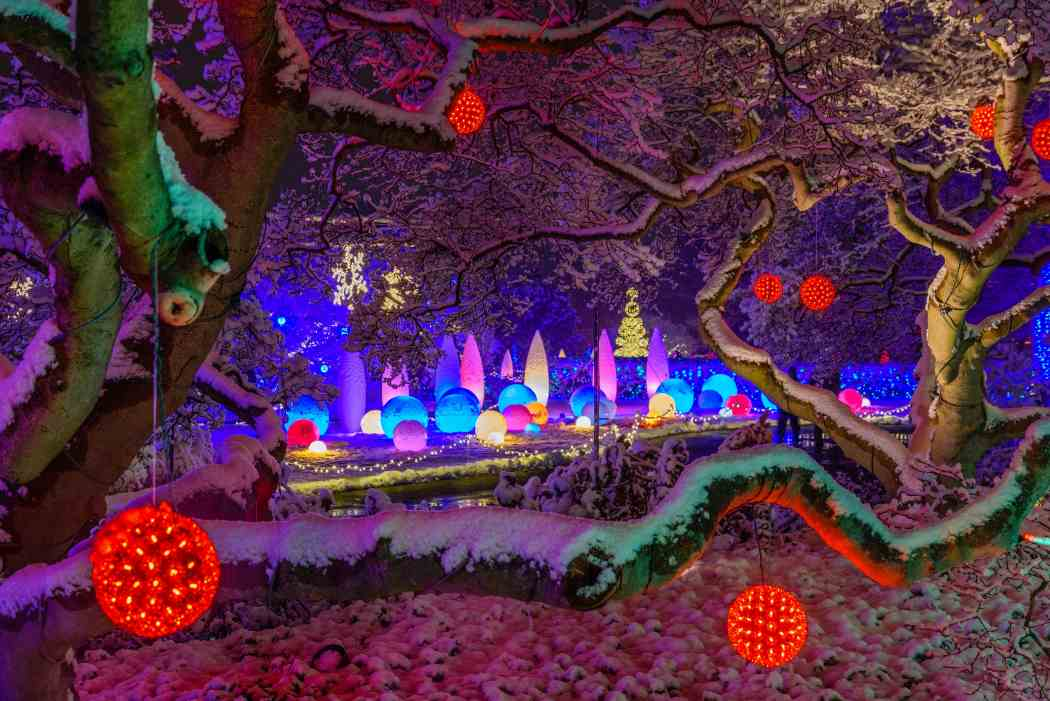 Winter Flower Show and Light Garden 2016: Days of Snow and Nights Aglow