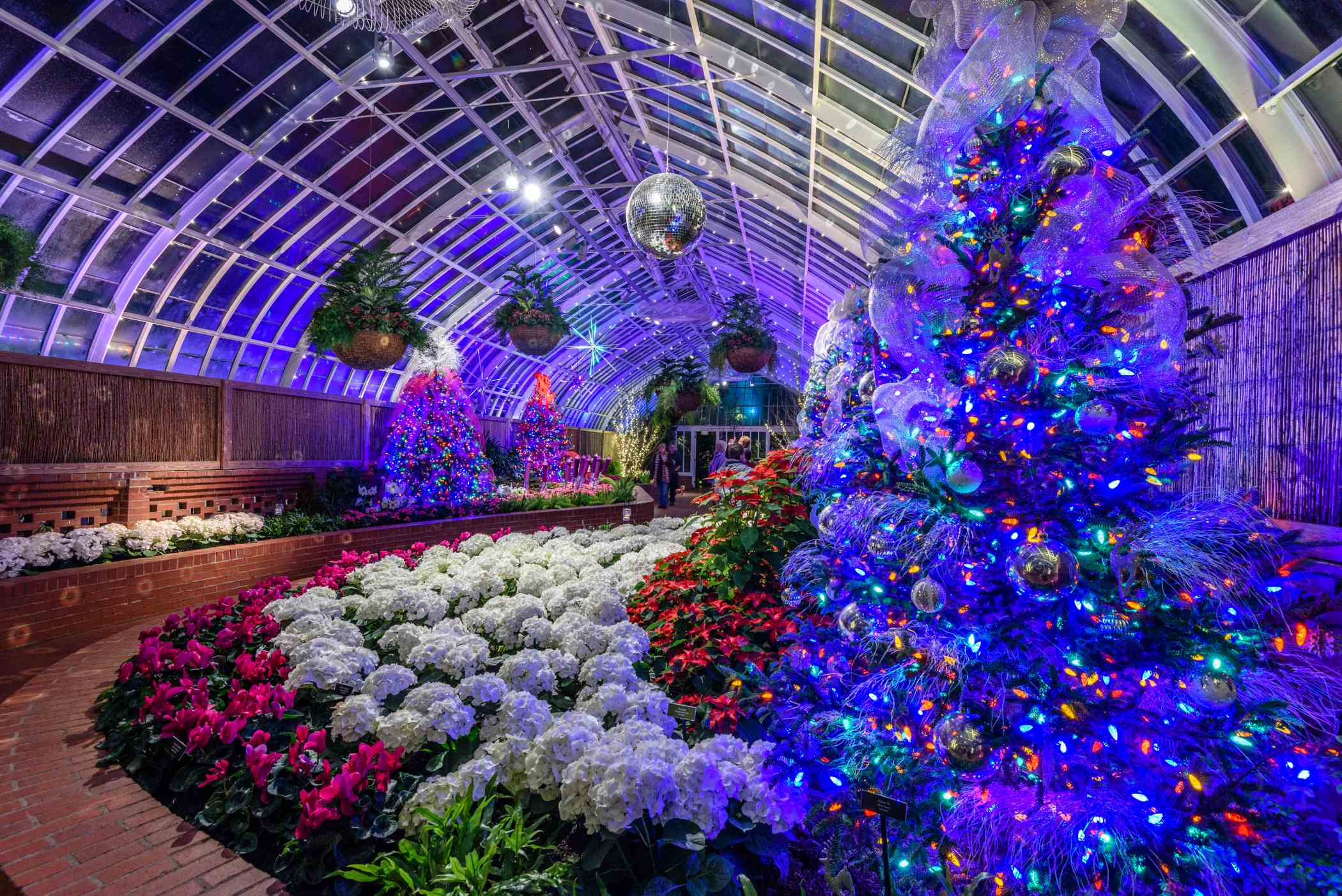 Phipps Conservatory Christmas 2021 Winter Flower Show And Light Garden 2017 Holiday Magic Phipps Conservatory And Botanical Gardens Pittsburgh Pa