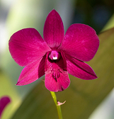 LAST CHANCE: Orchid and Tropical Bonsai Show: A Splash of Brilliance