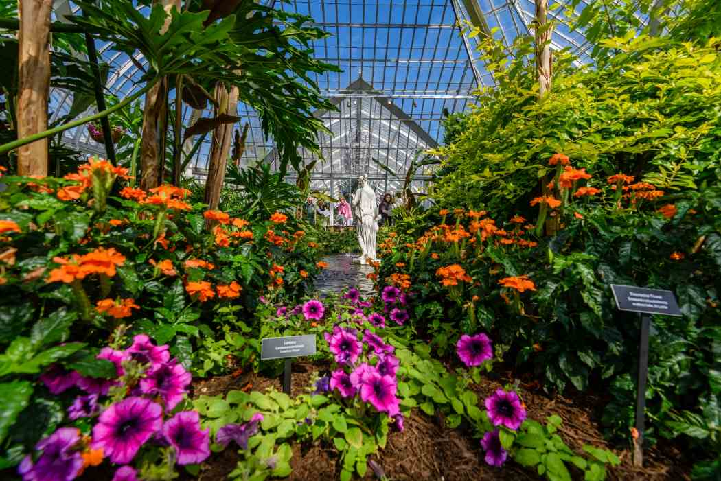 Summer Flower Show 2018: Gardens of Sound and Motion