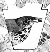 Birds and Botany: Works by Ashley Cecil