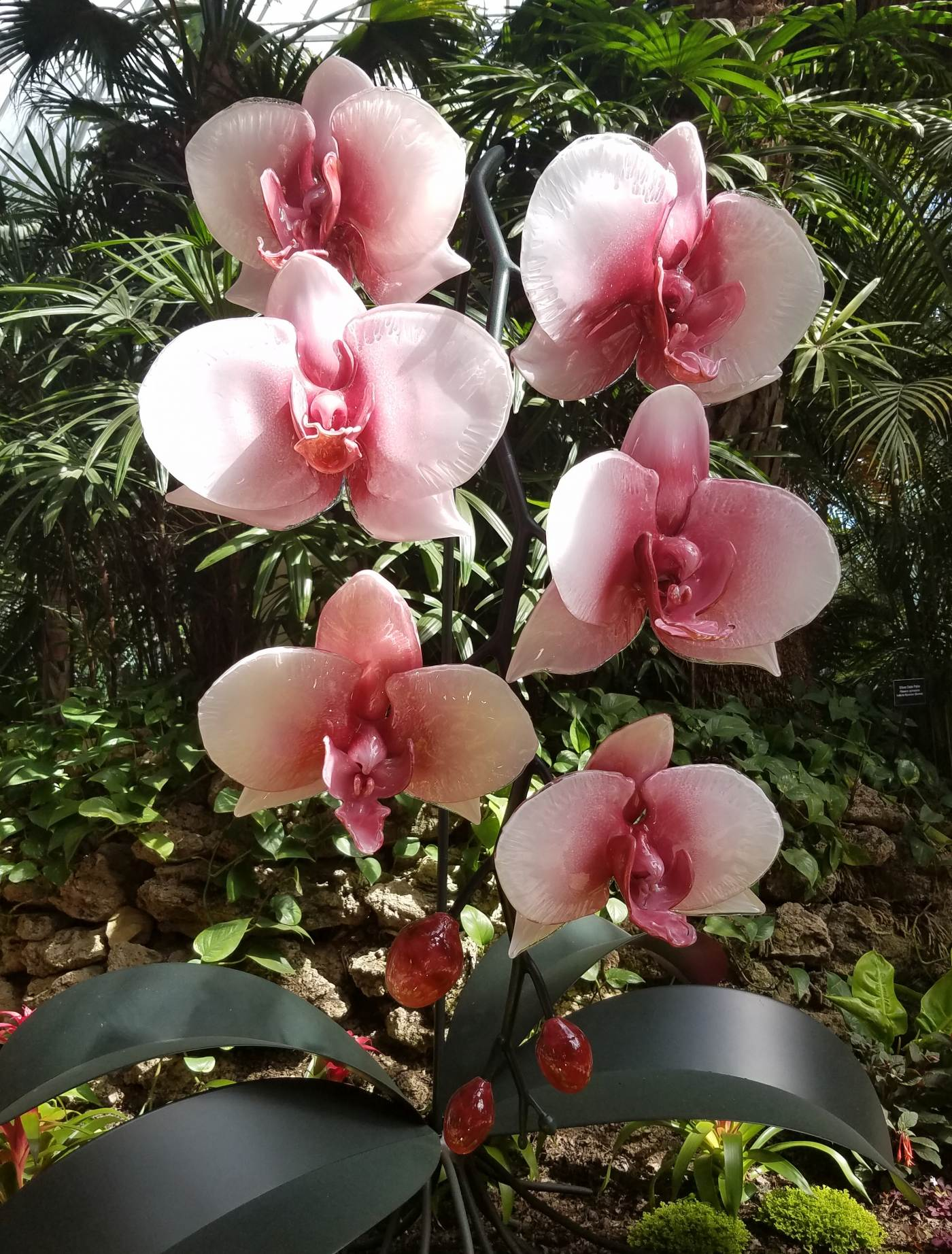 Sculpted glass orchids by artist Jason Gamrath are seen in Phipps' Palm Court.