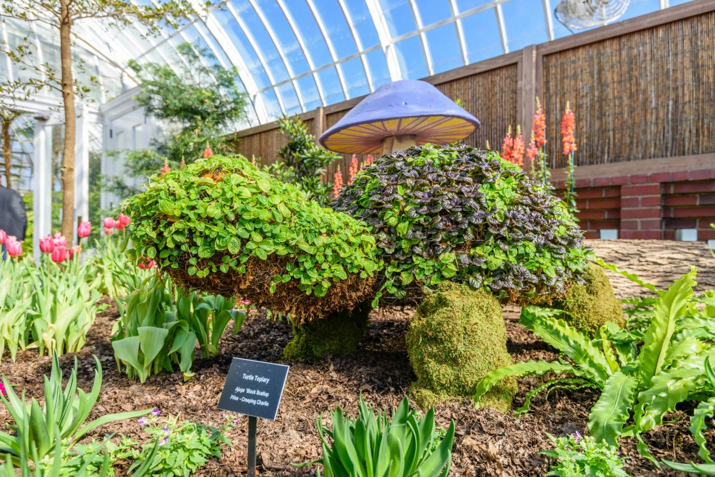 A topiary turtle stands in a bed of flowers in Phipps' Serpentine Room during Spring Flower Show.
