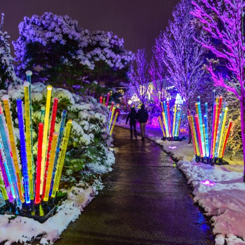 This Week at Phipps: Dec. 12 – 18