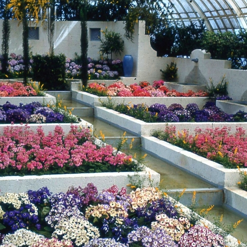 This Week at Phipps: March 6 – 12