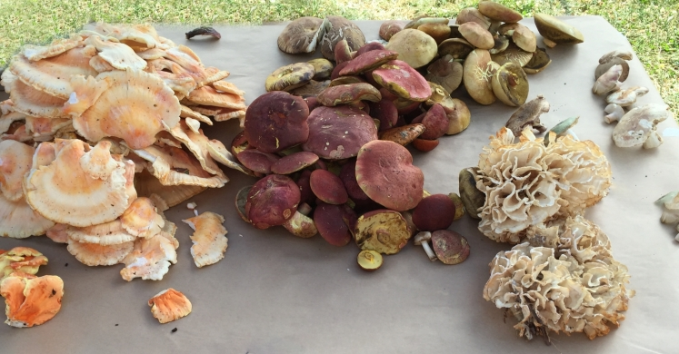 At The Market: Mushrooms For Life