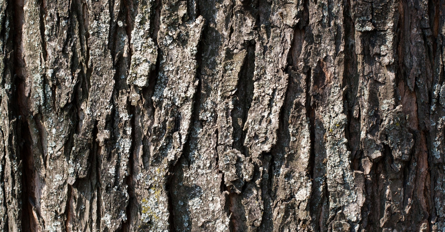 Biopgh Blog Tree Bark Identification Phipps Conservatory And