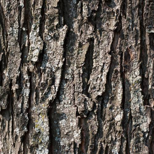 #bioPGH Blog: Tree Bark Identification