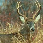 #bioPGH Blog: Oh Deer, Stuck in a Rut!