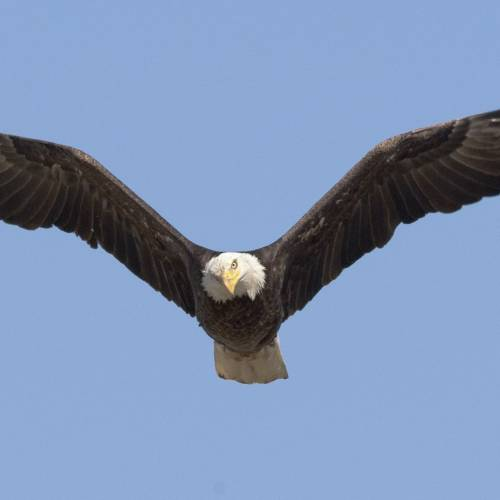 #bioPGH Blog: Pittsburgh's Eagles