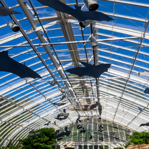 This Week at Phipps: Oct. 22 – 28