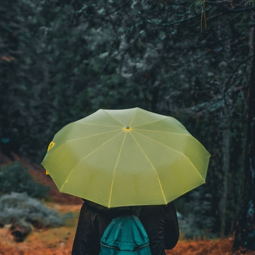 #bioPGH Blog: A Rainy Walk on a Spring Evening