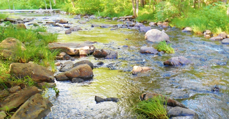 #bioPGH Blog: Conduct Your Own Stream Assessment