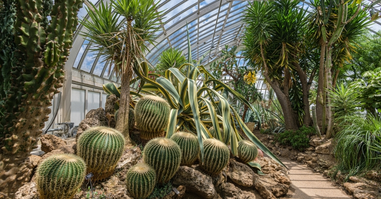 This Week at Phipps: July 1 – 7