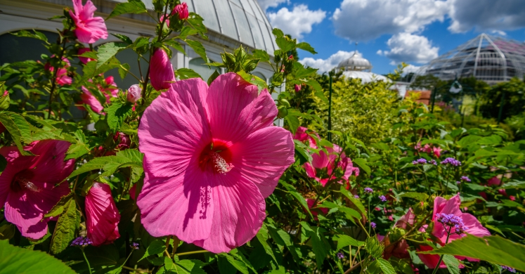 This Week at Phipps: July 23 – 29