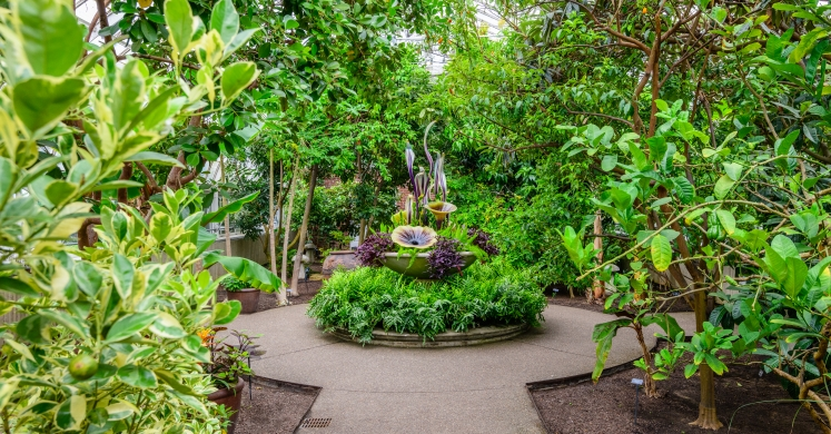 This Week at Phipps: June 25 – July 1