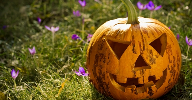 Enter the Healthy Halloween Photo Contest for a Chance to Win a Phipps Family Membership