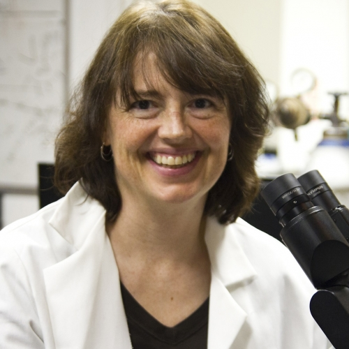 Meet a Scientist: Dr. Linda Peteanu