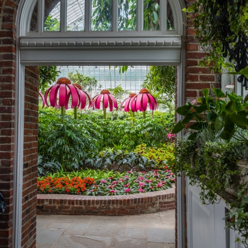 This Week at Phipps: June 4 – June 10