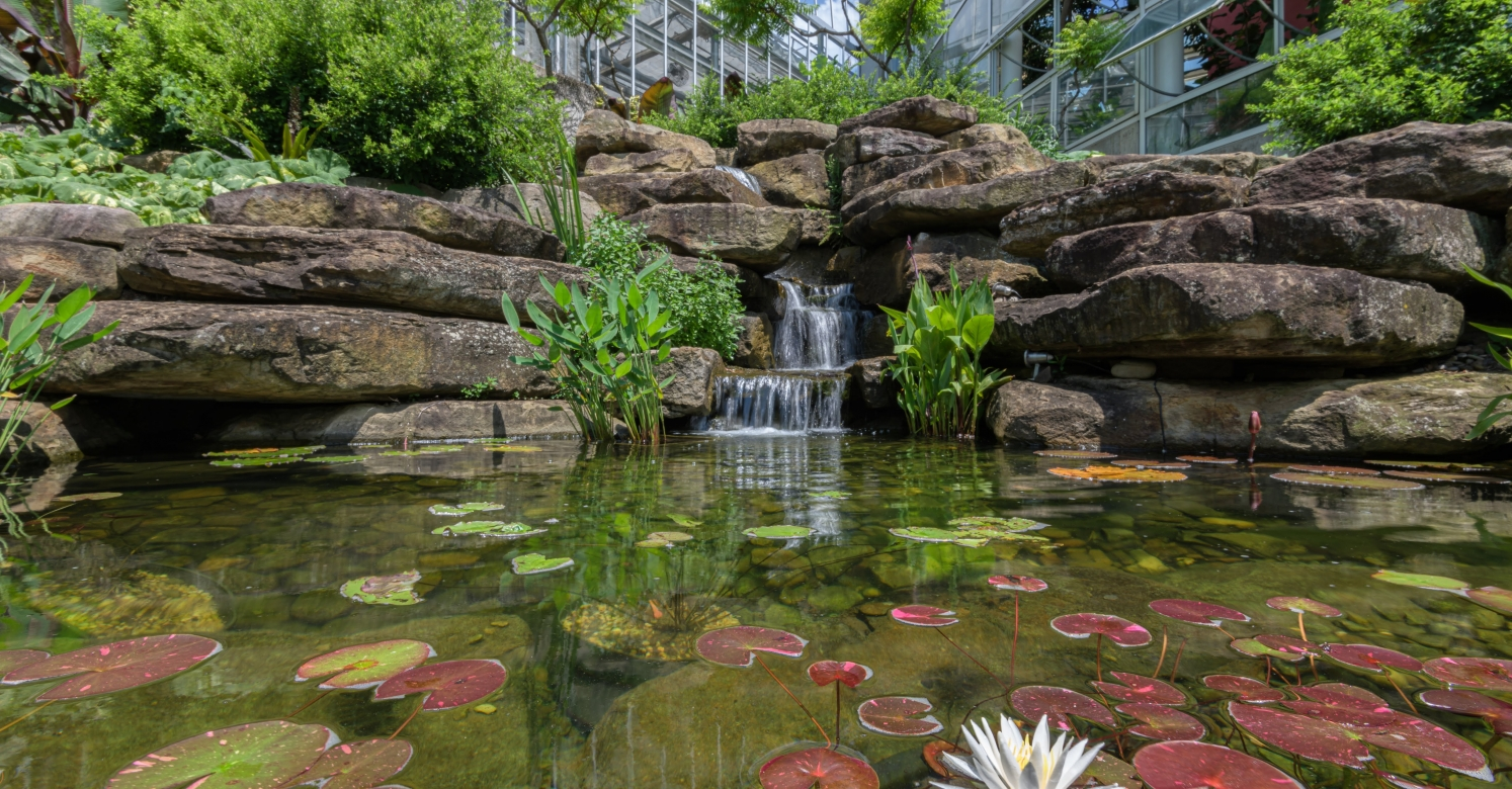 This Week at Phipps: July 15 – 21 | Phipps Conservatory and