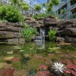 This Week at Phipps: July 15 – 21
