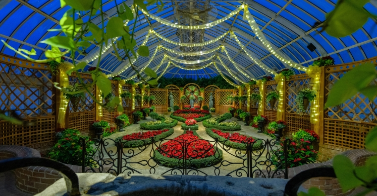 This Week at Phipps: Nov. 26 – Dec. 2