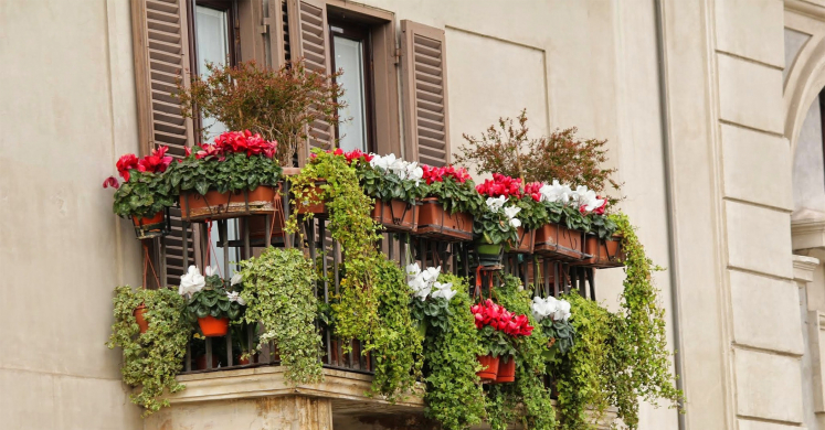 Ask Dr. Phipps: Balcony Oasis