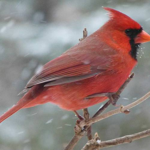 Ask Dr. Phipps: Winter is for the Birds