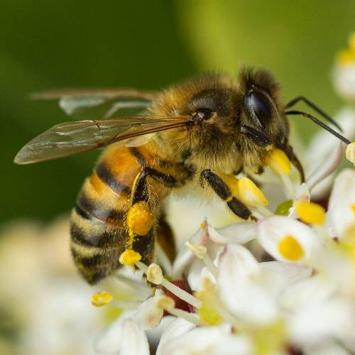 #bioPGH Blog: Honey Bees