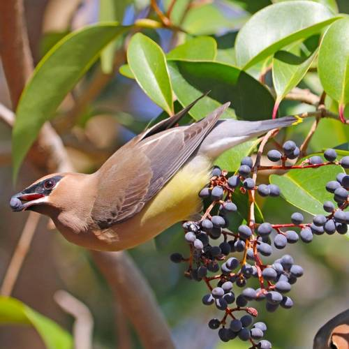 Early Spring Plants for Migrating Birds